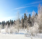Panorama winter landscape with forest, snow and blue sky Royalty Free Stock Photography