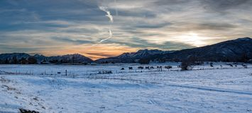 Panorama of a winter landscape at sunset in the mountains. Sunset panorama of a winter landscape in the mountains with cattle in the fields and snow on the stock photography