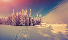 Panorama of the winter sunrise in the forest Stock Photos