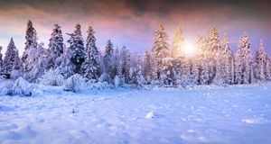 Panorama of the winter sunrise in mountain forest Stock Photo
