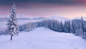 Panorama of the winter sunrise in mountains Royalty Free Stock Images