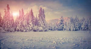 Panorama of the winter sunrise in the mountains. Royalty Free Stock Images