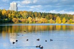 Panorama With Urban Park And Pond Stock Image