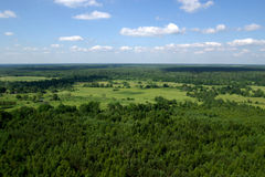 Panorama of a wood Royalty Free Stock Image