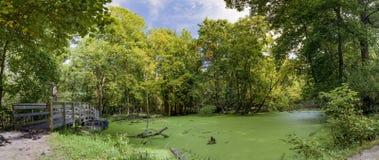 Panorama of a Woodland Pond - Ohio, USA Stock Photos