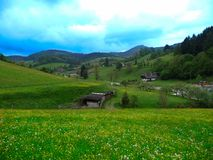 Panorama with yellow buttercups a green field under the clouds of the sky in Germany royalty free stock photo