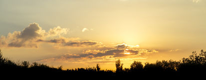 Panorama of the yellow sky at sunset over the silhouettes of trees.  Stock Photo