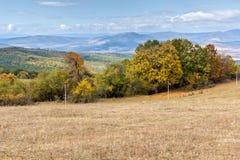 Panorama with yellow trees of Cherna Gora mountain, Bulgaria Stock Photos