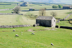Panorama of Yorkshire Dales (UK). Stone wall pattern and cottages at Malham, Yorkshire Dales National Park, United Kingdom Stock Image