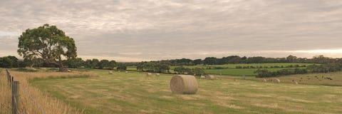 Panorama z haystack Obrazy Stock