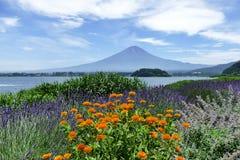 Panorama z lawendy pomarańcze i polem kwitnie przed górą Fuji, Kawaguchiko, Japonia zdjęcia stock
