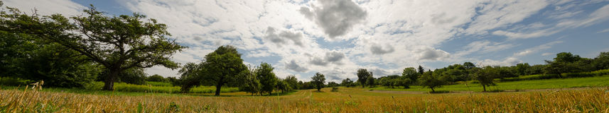 Panorama zieleni sad Zdjęcia Royalty Free