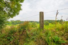 Panorama zielona łąka na wzgórzu w świetle słonecznym Fotografia Royalty Free