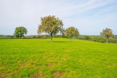 Panorama zielona łąka na wzgórzu w świetle słonecznym Obraz Royalty Free