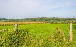 Panorama zielona łąka na wzgórzu w świetle słonecznym Fotografia Stock