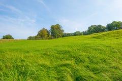 Panorama zielona łąka na wzgórzu w świetle słonecznym Zdjęcie Royalty Free