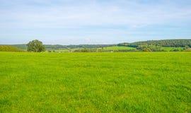 Panorama zielona łąka na wzgórzu w świetle słonecznym Zdjęcia Stock