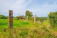 Panorama zielona łąka na wzgórzu w świetle słonecznym Zdjęcie Stock