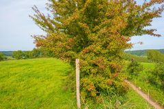 Panorama zielona łąka na wzgórzu w świetle słonecznym Obrazy Stock