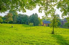 Panorama zielona łąka na wzgórzu w świetle słonecznym Obrazy Royalty Free
