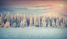 Panorama zima wschód słońca w mgłowych górach Zdjęcia Royalty Free