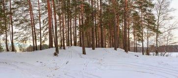 panorama Zimy zimy Lasowy krajobraz Zdjęcie Stock