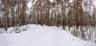 panorama Zimy zimy Lasowy krajobraz Zdjęcie Royalty Free