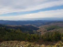 Panorama zwart bos Royalty-vrije Stock Fotografie