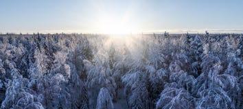 Panoramaansicht nördlichen alias taiga Waldes am Winter lizenzfreie stockfotos