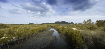 Panoramaansicht von Sprungserde und von trockenem Wasser unter Mangrovenwald mit blauem Himmel, Wolken und langem Berg im Hinterg Stockfotos
