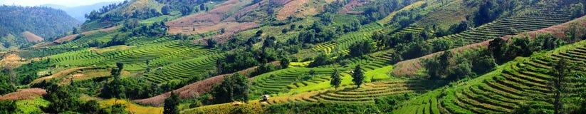 Panoramabild von Landwirtschaftsfeldern zu Fuß des Hügels Lizenzfreie Stockfotos