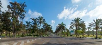 Panoramablick der Asphaltstraße gestaltet durch Bäume und Palmen mit teils bewölktem Himmel an einem Sommertag stockfotos