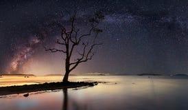 Panoramablick der sternenklaren Nacht mit Milchstraße Lizenzfreie Stockfotografie