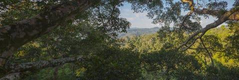 Panoramablick des Dschungels Stockfoto