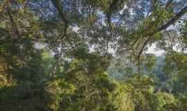 Panoramablick des Dschungels Lizenzfreie Stockfotografie