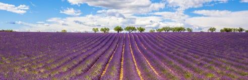 Panoramablick des Lavendelfeldes stockfotografie