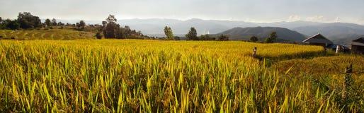 Panoramablick des Reisbauernhofes und des bewölkten blauen Himmels durch lokale Leute im Berg, nördlicher Teil von Thailand Lizenzfreie Stockbilder