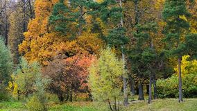 Panoramablick des schönen Herbstparks stock video footage