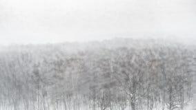 Panoramablick des Stadtparks im Schneesturm im Winter lizenzfreies stockbild