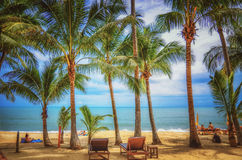 Panoramablick des tropischen Strandes mit KokosnussPalmen Lizenzfreie Stockfotos