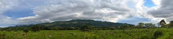 Panoramablick des Weiden lassens auf dem Hintergrund grüner Berge c Stockfotos