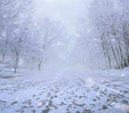 Panoramablick des Winterparks, Abdrücke auf Schnee Stockbild