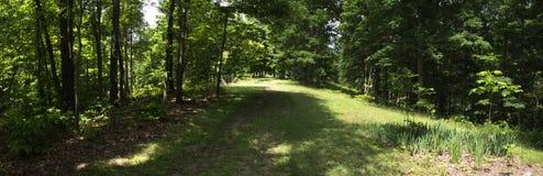 Panoramablick einer Wiese stockbilder