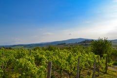 Panoramablick eines Weinbergs in der toskanischen Landschaft Lizenzfreie Stockfotografie