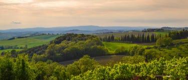 Panoramablick eines Weinbergs in der toskanischen Landschaft Stockbilder