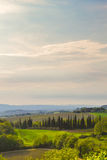 Panoramablick eines Weinbergs in der toskanischen Landschaft Lizenzfreies Stockbild