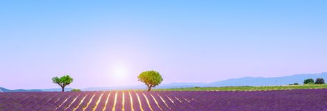 Panoramablick mit purpurroten Lavendelfeldern, Valensole-Hochebene, Provence, Frankreich stockfotos