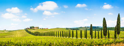 Panoramablick szenischer Toskana-Landschaft mit Weinberg in der Chiantiregion, Toskana, Italien stockfotos