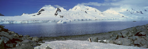 Panoramablick von Chinstrap-Pinguin (Pygoscelis die Antarktis) unter Felsformationen auf Halbmond-Insel, Bransfield-Straße, Antar Stockfotografie