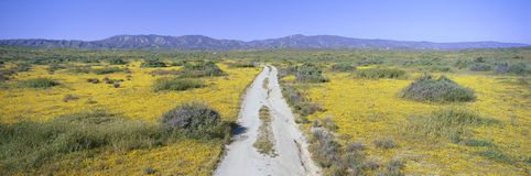 Panoramablick von Frühlingsblumen und von grüner Rolling Hills im Carrizo-Ebenen-Nationaldenkmal, San Luis Obispo County, Kalifor Lizenzfreie Stockfotos